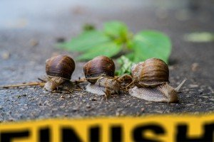 three snails heading for a finish line